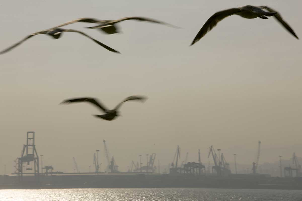 Seagulls off the Port of Bilbao